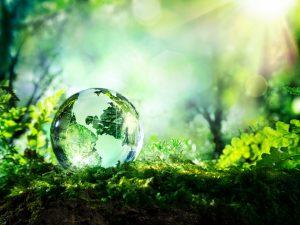ייעוץ סביבתי בחברת פלגי מים