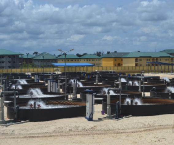 View of Grow Out Tanks built in the project