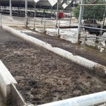 Double static separator for the removal of solids from cowshed wastewater